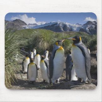 Antarctica, South Georgia Island UK), King 6 Mouse Pad