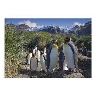 Antarctica, South Georgia Island UK), King 6 Photo Print