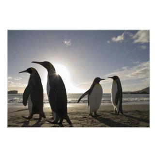 Antarctica South Georgia Island UK King 6 Photo Print