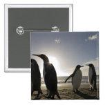 Antarctica, South Georgia Island UK), King 7 Pinback Buttons