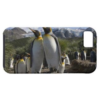 Antarctica, South Georgia Island (UK), King 7 iPhone 5 Cover