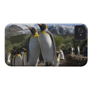Antarctica, South Georgia Island (UK), King 7 iPhone 4 Case-Mate Case