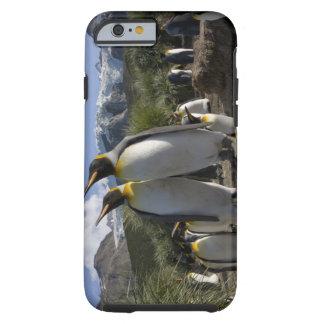 Antarctica, South Georgia Island (UK), King 7 Tough iPhone 6 Case