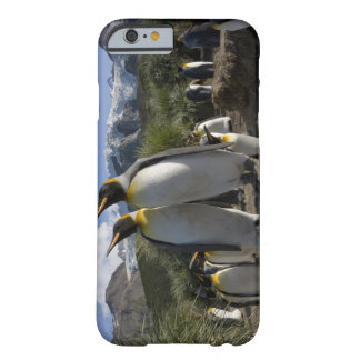 Antarctica, South Georgia Island (UK), King 7 Barely There iPhone 6 Case