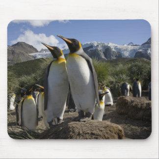 Antarctica, South Georgia Island (UK), King 7 Mouse Pad