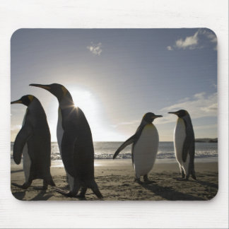 Antarctica, South Georgia Island UK), King 7 Mouse Pad