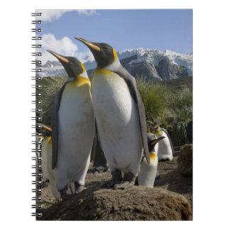 Antarctica, South Georgia Island (UK), King 7 Notebook