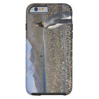 Antarctica, South Georgia Island (UK), King 8 Tough iPhone 6 Case