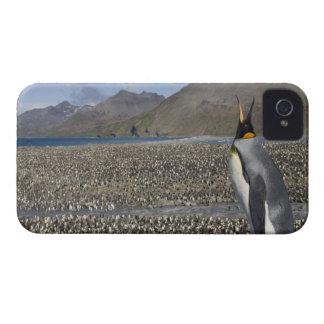 Antarctica, South Georgia Island (UK), King 8 iPhone 4 Covers