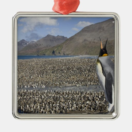 Antarctica, South Georgia Island (UK), King 8 Metal Ornament