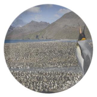 Antarctica, South Georgia Island (UK), King 8 Party Plates