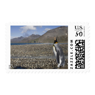 Antarctica, South Georgia Island (UK), King 8 Postage