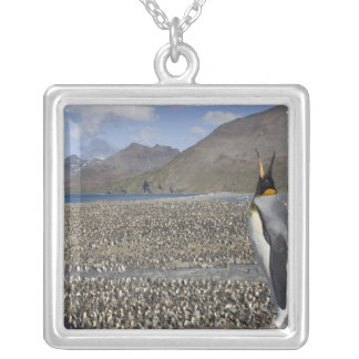 Antarctica, South Georgia Island (UK), King 8 Silver Plated Necklace