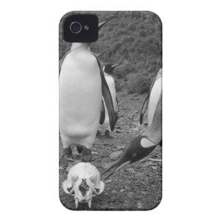 Antarctica, South Georgia Island (UK), King 9 iPhone 4 Case-Mate Cases