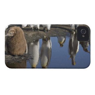 Antarctica, South Georgia Island (UK), King iPhone 4 Covers