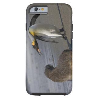 Antarctica, South Georgia Island (UK)King Tough iPhone 6 Case