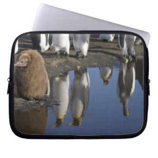 Antarctica, South Georgia Island (UK), King Laptop Sleeve