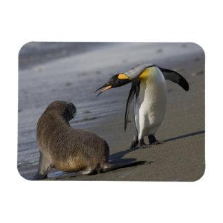 Antarctica, South Georgia Island (UK)King Magnet
