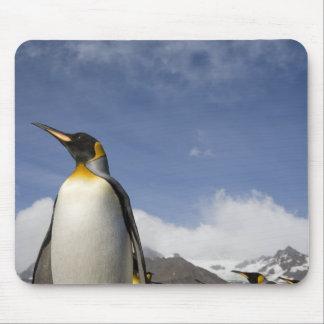 Antarctica, South Georgia Island UK), King Mouse Pad