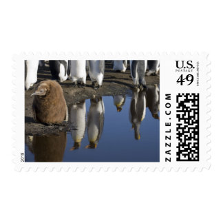 Antarctica, South Georgia Island (UK), King Postage