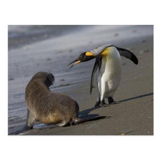 Antarctica, South Georgia Island (UK)King Postcard