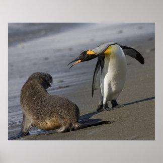 Antarctica, South Georgia Island (UK)King Poster