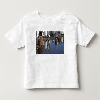 Antarctica, South Georgia Island (UK), King Toddler T-shirt