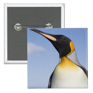 Antarctica, South Georgia Island (UK), Portrait Pins
