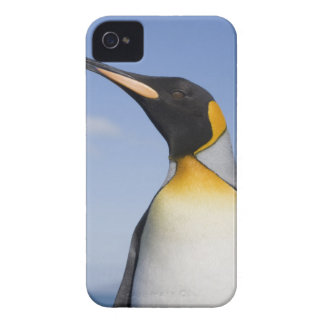 Antarctica, South Georgia Island (UK), Portrait iPhone 4 Case
