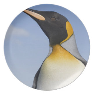 Antarctica, South Georgia Island (UK), Portrait Melamine Plate