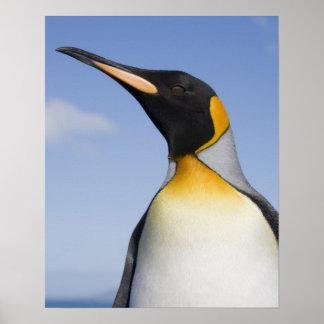 Antarctica, South Georgia Island (UK), Portrait Poster