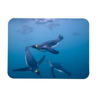 Antarctica, South Georgia Island (UK), Rectangular Photo Magnet