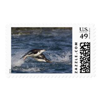 Antarctica, South Shetland Islands, Gourdon Postage