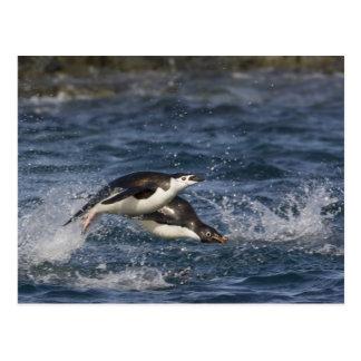 Antarctica, South Shetland Islands, Gourdon Post Card