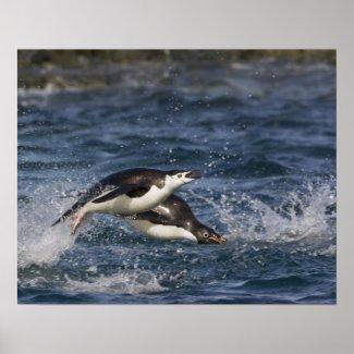 Antarctica, South Shetland Islands, Gourdon Posters