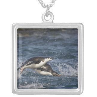 Antarctica, South Shetland Islands, Gourdon Square Pendant Necklace