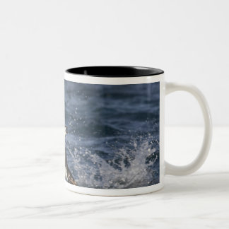 Antarctica, South Shetland Islands, Gourdon Two-Tone Coffee Mug
