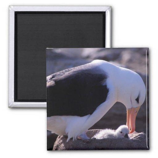 Antarctica, Sub-Antarctic Islands, South 4 2 Inch Square Magnet