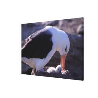 Antarctica, Sub-Antarctic Islands, South 4 Gallery Wrapped Canvas