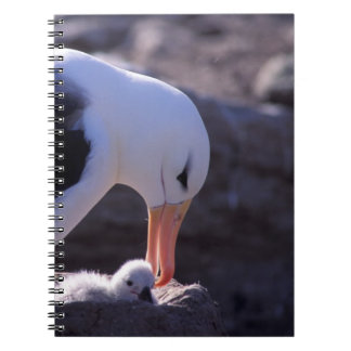 Antarctica, Sub-Antarctic Islands, South 4 Notebook