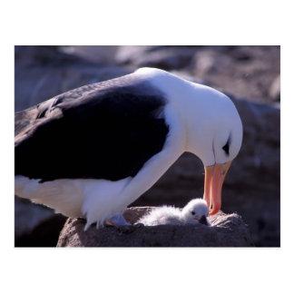 Antarctica, Sub-Antarctic Islands, South 4 Postcard