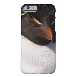 Antarctica, Sub-Antarctic Islands, South 5 Barely There iPhone 6 Case