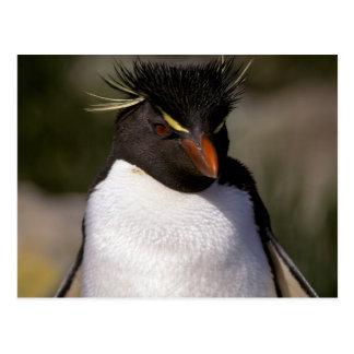 Antarctica, Sub-Antarctic Islands, South 5 Postcard