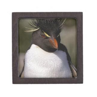 Antarctica, Sub-Antarctic Islands, South 5 Premium Gift Box