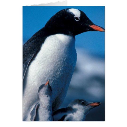 Antarctica, Sub-Antarctic Islands, South Card