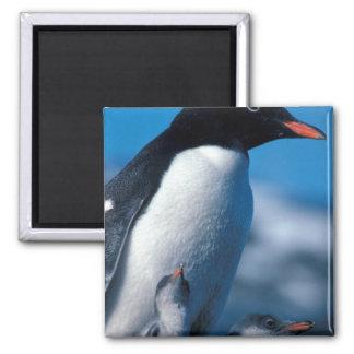 Antarctica, Sub-Antarctic Islands, South Refrigerator Magnet