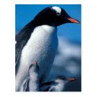Antarctica, Sub-Antarctic Islands, South Postcard