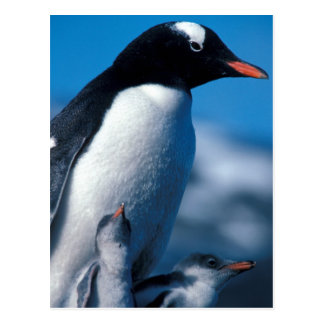 Antarctica, Sub-Antarctic Islands, South Postcard