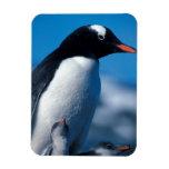 Antarctica, Sub-Antarctic Islands, South Rectangle Magnets