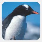 Antarctica, Sub-Antarctic Islands, South Square Sticker